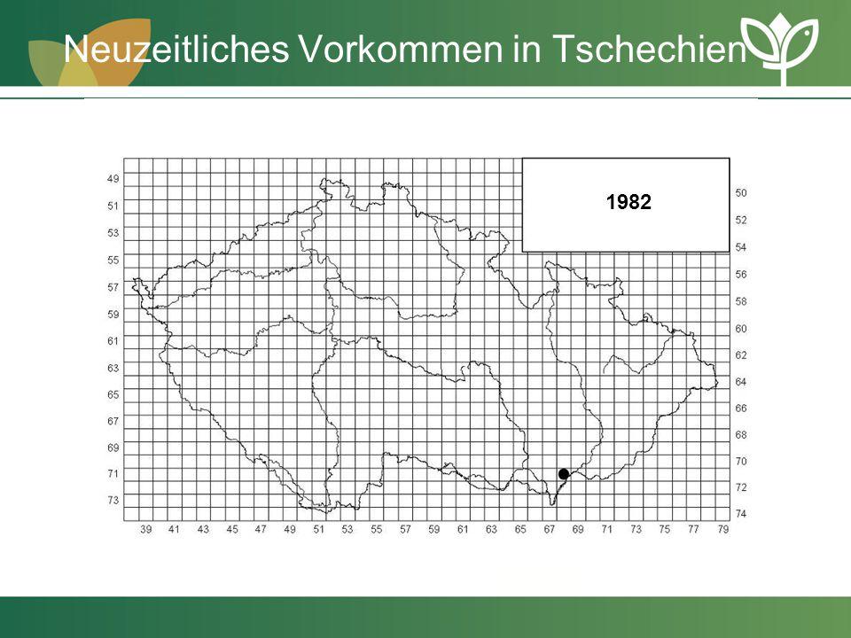 Neuzeitliches Vorkommen in Tschechien 1982