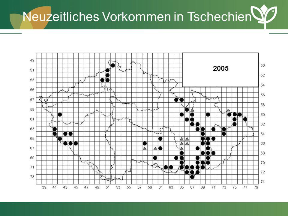 2005 Neuzeitliches Vorkommen in Tschechien