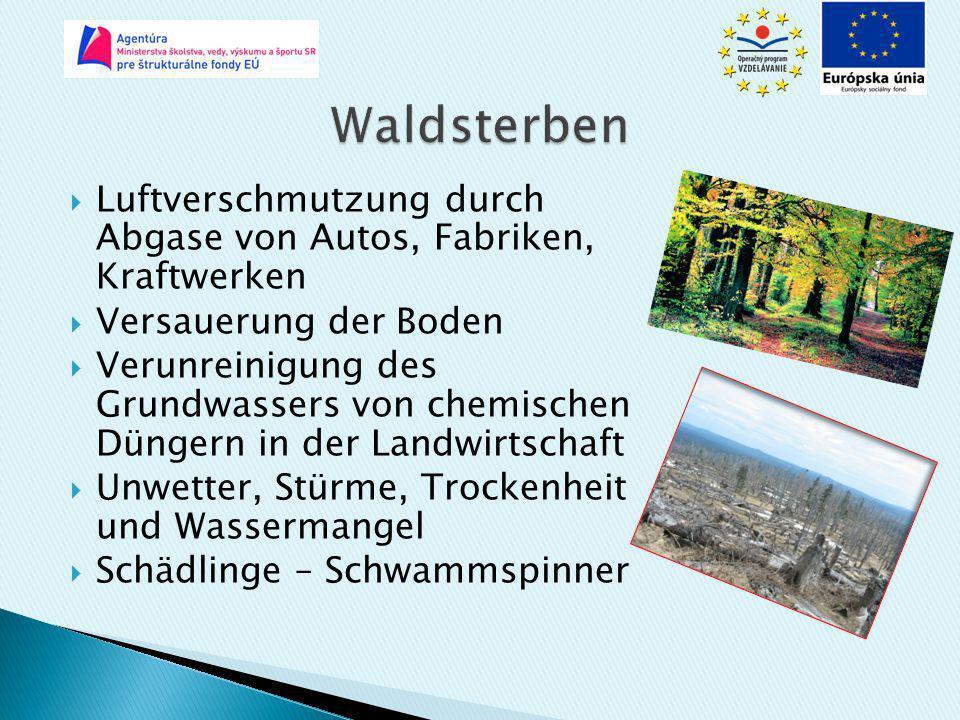  Luftverschmutzung durch Abgase von Autos, Fabriken, Kraftwerken  Versauerung der Boden  Verunreinigung des Grundwassers von chemischen Düngern in