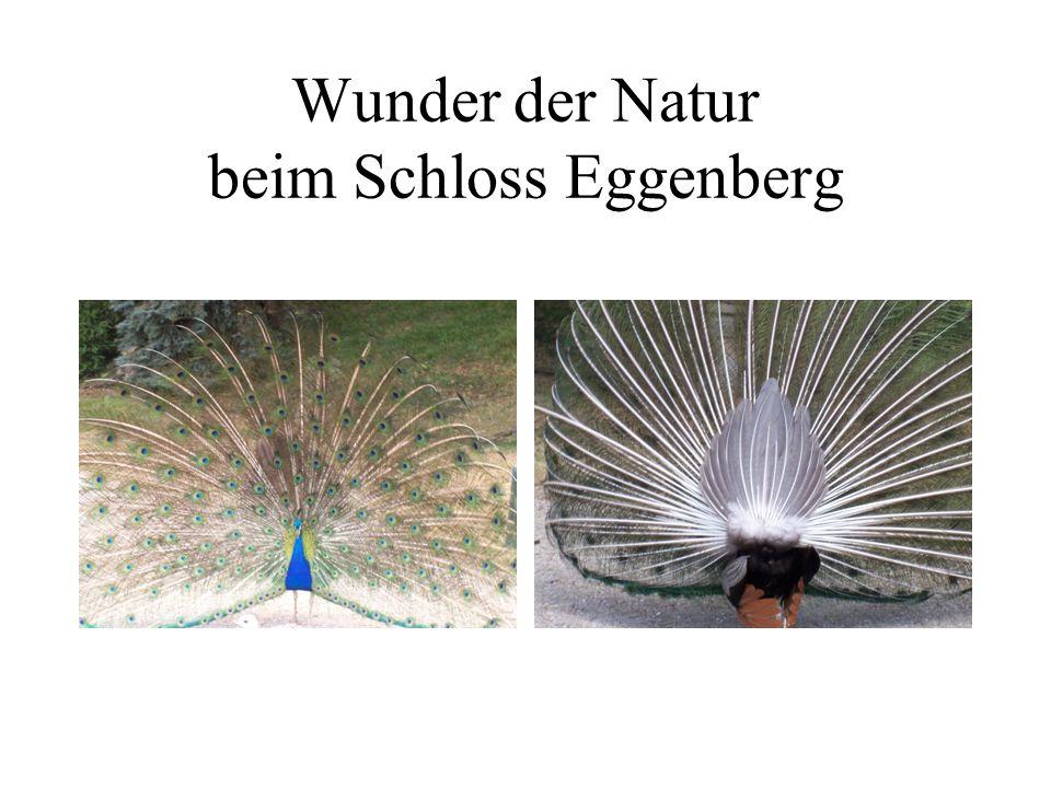Wunder der Natur beim Schloss Eggenberg
