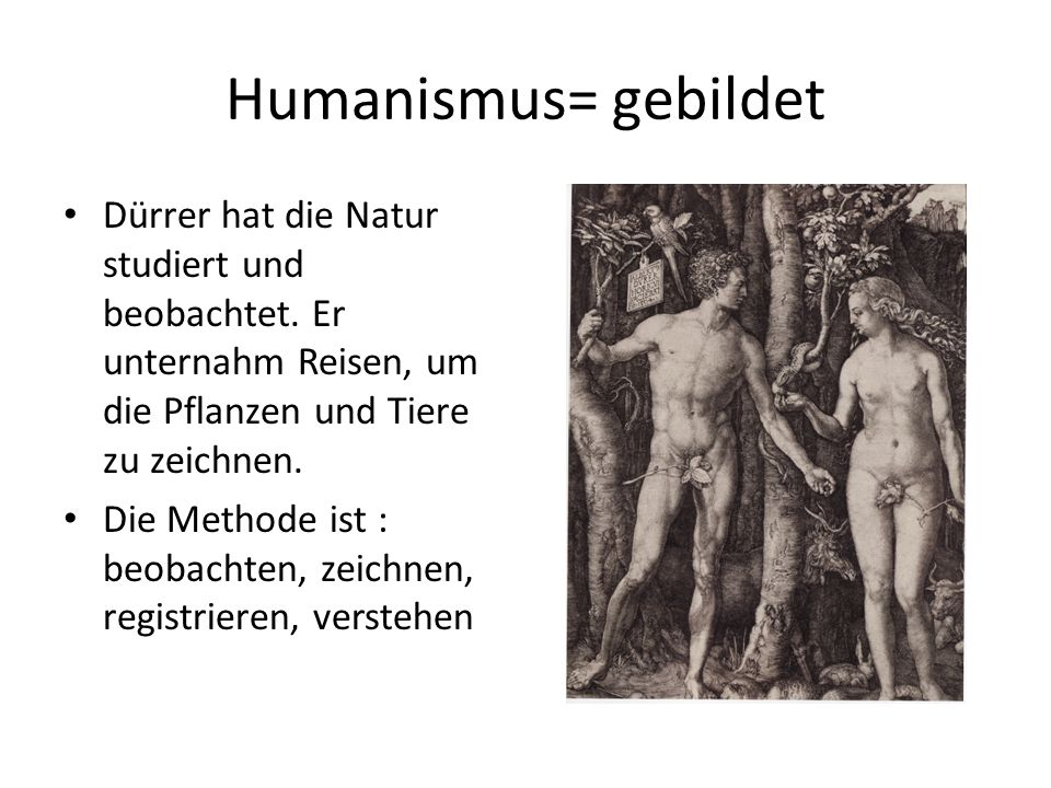 Humanismus= gebildet Dürrer hat die Natur studiert und beobachtet. Er unternahm Reisen, um die Pflanzen und Tiere zu zeichnen. Die Methode ist : beoba