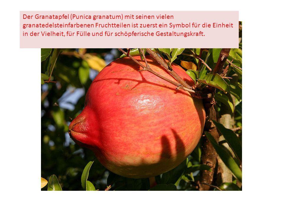 Der Granatapfel (Punica granatum) mit seinen vielen granatedelsteinfarbenen Fruchtteilen ist zuerst ein Symbol für die Einheit in der Vielheit, für Fülle und für schöpferische Gestaltungskraft.