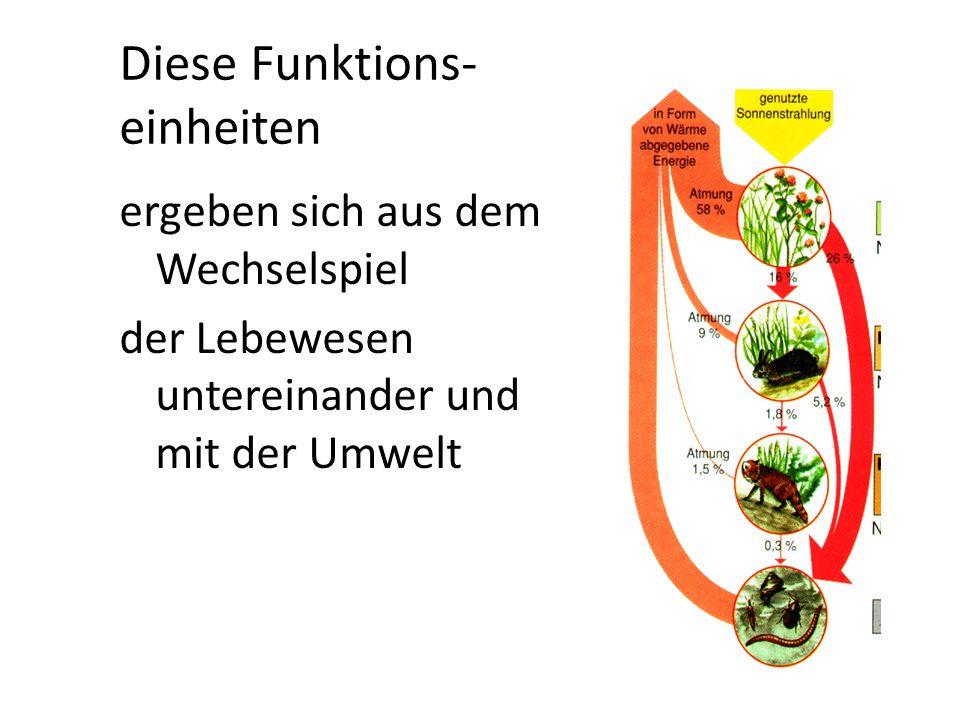 Diese Funktions- einheiten ergeben sich aus dem Wechselspiel der Lebewesen untereinander und mit der Umwelt