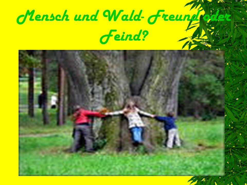 Wir besprechen heute folgende Probleme:  Die Bedeutung des Waldes  Waldverschmutzung  Die Lösung der Probleme