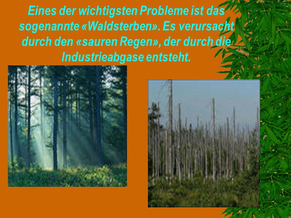 Eines der wichtigsten Probleme ist das sogenannte «Waldsterben». Es verursacht durch den «sauren Regen», der durch die Industrieabgase entsteht.