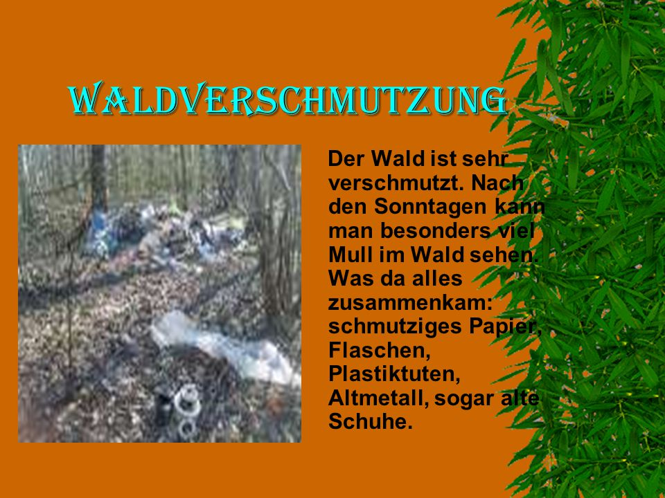 Waldverschmutzung Der Wald ist sehr verschmutzt. Nach den Sonntagen kann man besonders viel Mull im Wald sehen. Was da alles zusammenkam: schmutziges