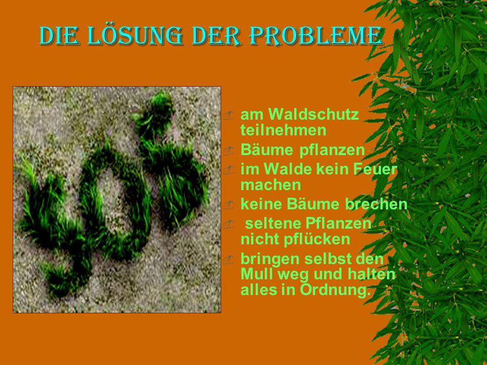 Die Lösung der Probleme  am Waldschutz teilnehmen  Bäume pflanzen  im Walde kein Feuer machen  keine Bäume brechen  seltene Pflanzen nicht pflück