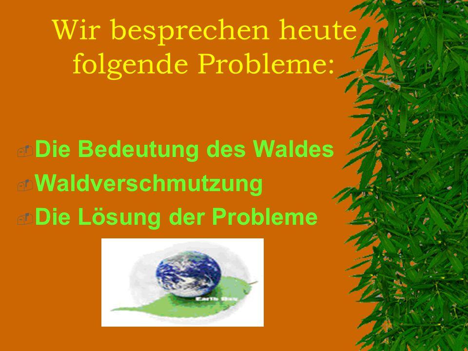 Eines der wichtigsten Probleme ist das sogenannte «Waldsterben».
