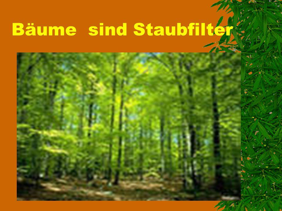 Wir brauchen, wie alle anderen Lebewesen, Sauerstoff zum Leben Ein großer Baum kann so viel Sauerstoff erzeugen, wie 10 Menschen ihn zum Atmen brauchen.