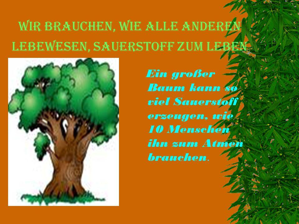 Wir brauchen, wie alle anderen Lebewesen, Sauerstoff zum Leben Ein großer Baum kann so viel Sauerstoff erzeugen, wie 10 Menschen ihn zum Atmen brauche
