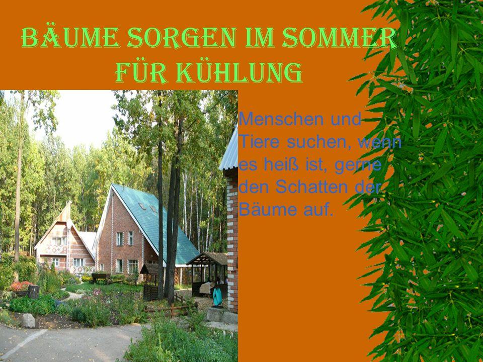 Bäume sorgen im Sommer für Kühlung  Menschen und Tiere suchen, wenn es heiß ist, gerne den Schatten der Bäume auf.