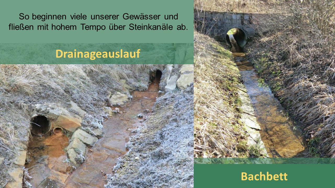 Drainageauslauf Bachbett So beginnen viele unserer Gewässer und fließen mit hohem Tempo über Steinkanäle ab.