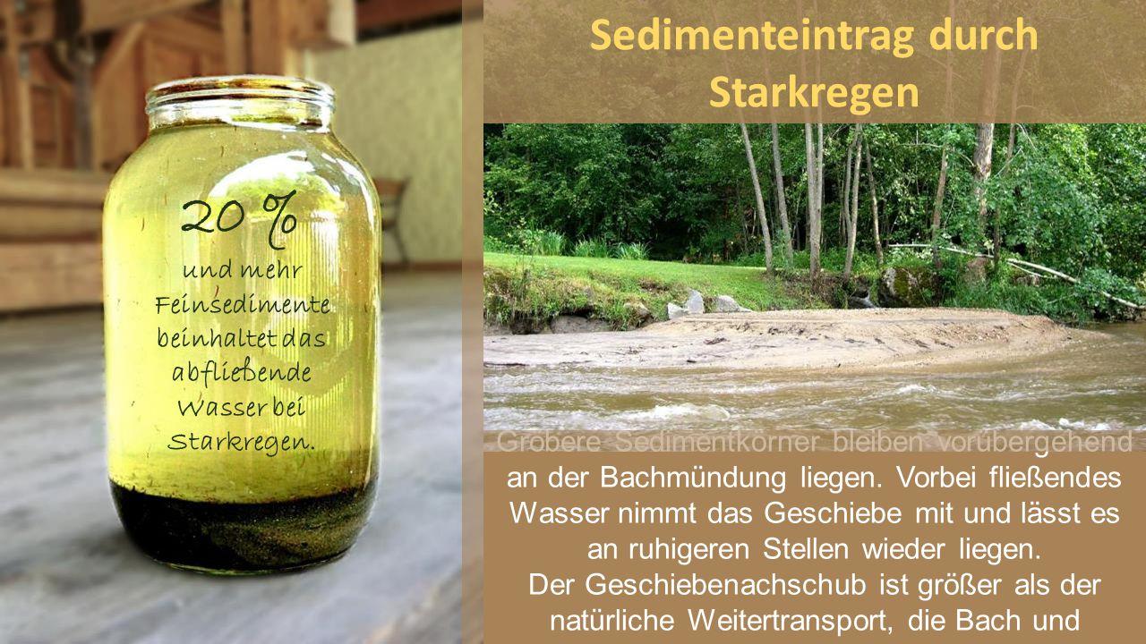 20 % und mehr Feinsedimente beinhaltet das abfließende Wasser bei Starkregen. Gröbere Sedimentkörner bleiben vorübergehend an der Bachmündung liegen.