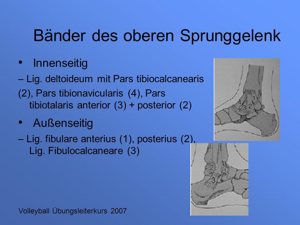 Volleyball Übungsleiterkurs 2007 Innenseitig – Lig. deltoideum mit Pars tibiocalcanearis (2), Pars tibionavicularis (4), Pars tibiotalaris anterior (3