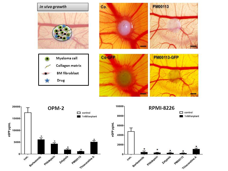 in vivo growth Co-GFP Co. PM00113 PM00113-GFP Myeloma cell Collagen matrix BM fibroblast Drug Co-GFP OPM-2 RPMI-8226