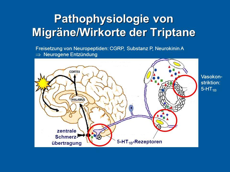 Pathophysiologie von Migräne/Wirkorte der Triptane Vasokon- striktion: 5-HT 1B Freisetzung von Neuropeptiden: CGRP, Substanz P, Neurokinin A  Neurogene Entzündung 5-HT 1D -Rezeptoren zentrale Schmerz- übertragung