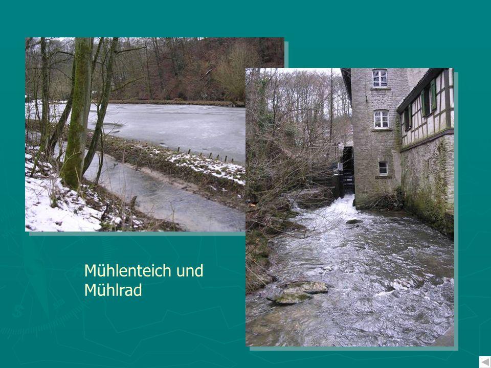 Mühlenteich und Mühlrad