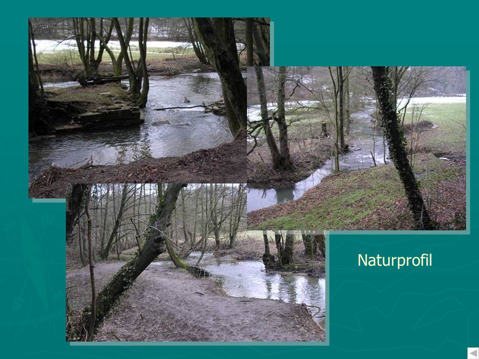 Naturprofil