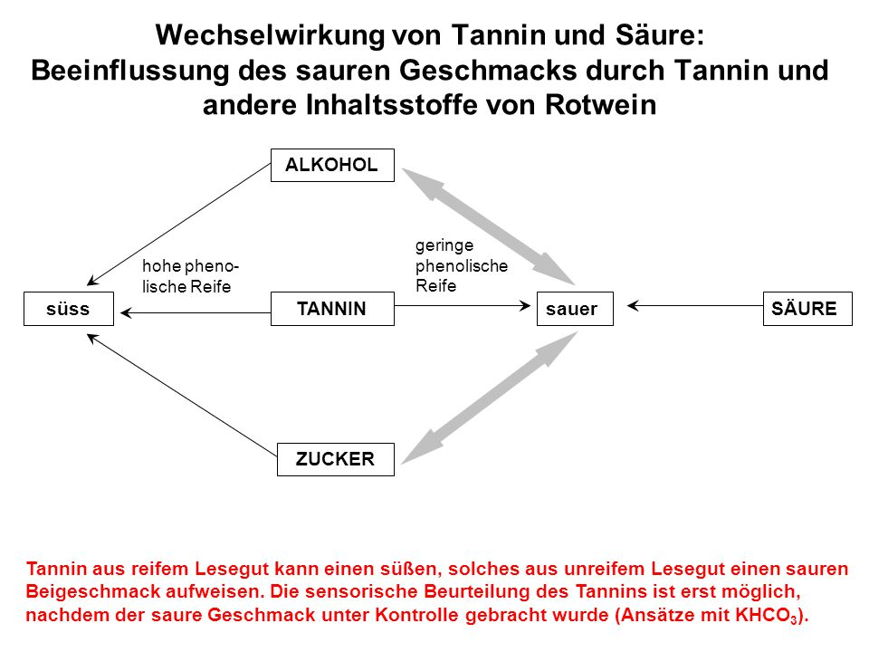 Wechselwirkung von Tannin und Säure: Beeinflussung des sauren Geschmacks durch Tannin und andere Inhaltsstoffe von Rotwein süssTANNINsauerSÄURE ALKOHO