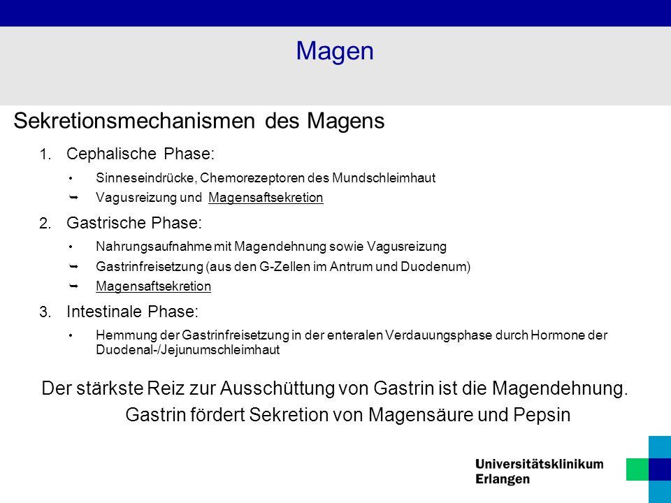 Sekretionsmechanismen des Magens 1. Cephalische Phase: Sinneseindrücke, Chemorezeptoren des Mundschleimhaut  Vagusreizung und Magensaftsekretion 2. G