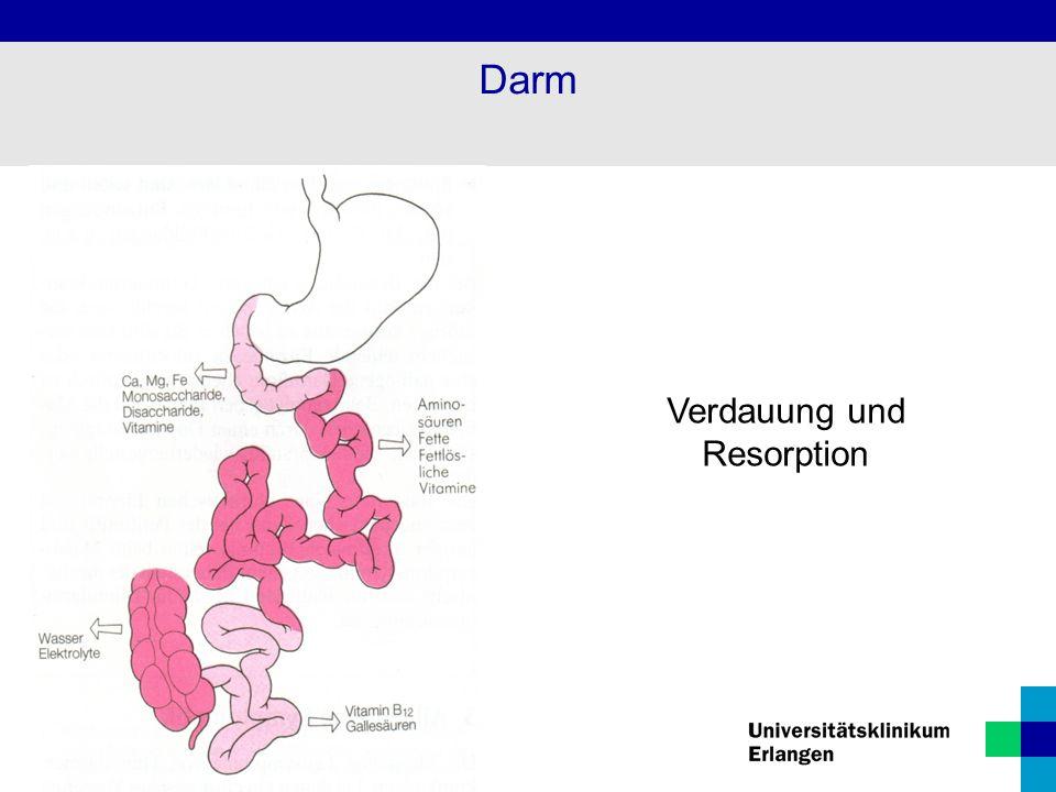Darm Verdauung und Resorption