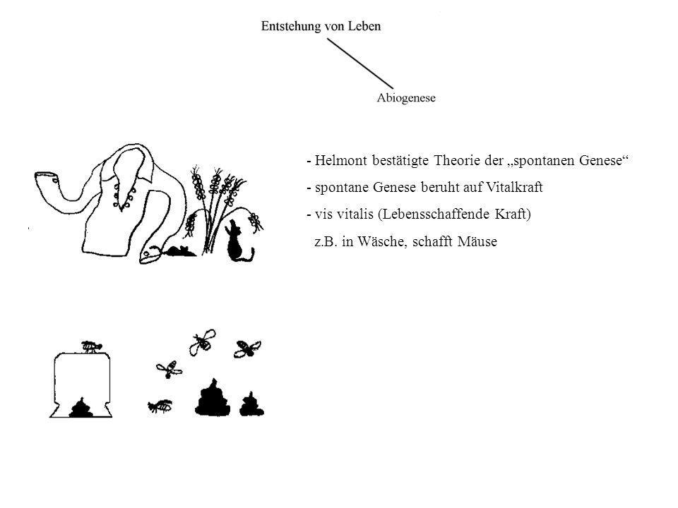 """- Helmont bestätigte Theorie der """"spontanen Genese"""" - spontane Genese beruht auf Vitalkraft - vis vitalis (Lebensschaffende Kraft) z.B. in Wäsche, sch"""
