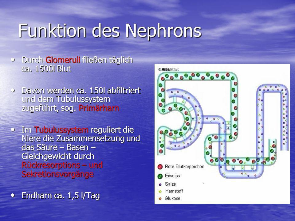 Funktion des Nephrons Durch Glomeruli fließen täglich ca. 1500l Blut Durch Glomeruli fließen täglich ca. 1500l Blut Davon werden ca. 150l abfiltriert