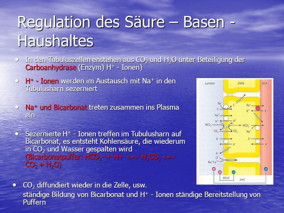 Regulation des Säure – Basen - Haushaltes In den Tubuluszellen enstehen aus CO 2 und H 2 O unter Beteiligung der Carboanhydrase (Enzym) H + - Ionen) I