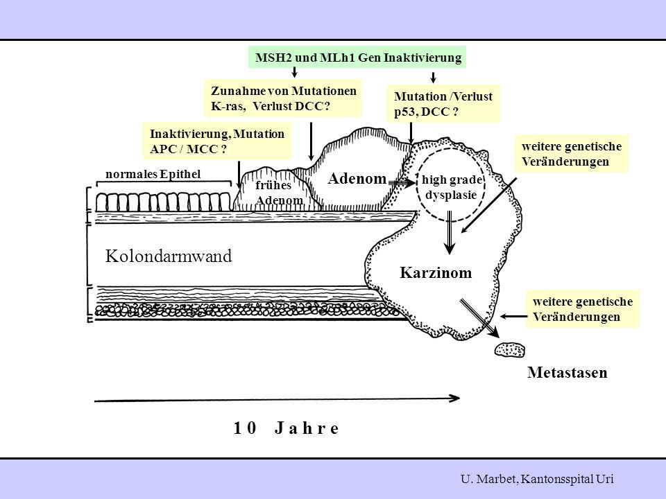 Karzinom Metastasen high grade dysplasie Adenom frühes Adenom normales Epithel 1 0 J a h r e Inaktivierung, Mutation APC / MCC .