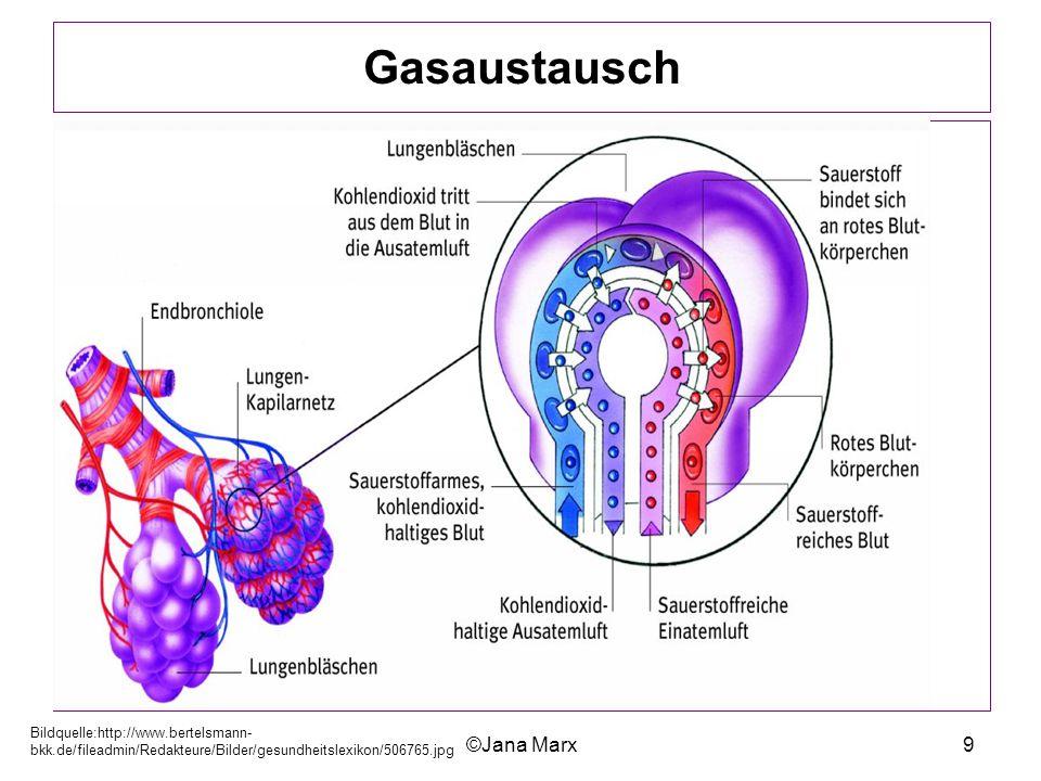 ©Jana Marx9 Gasaustausch Bildquelle:http://www.bertelsmann- bkk.de/fileadmin/Redakteure/Bilder/gesundheitslexikon/506765.jpg