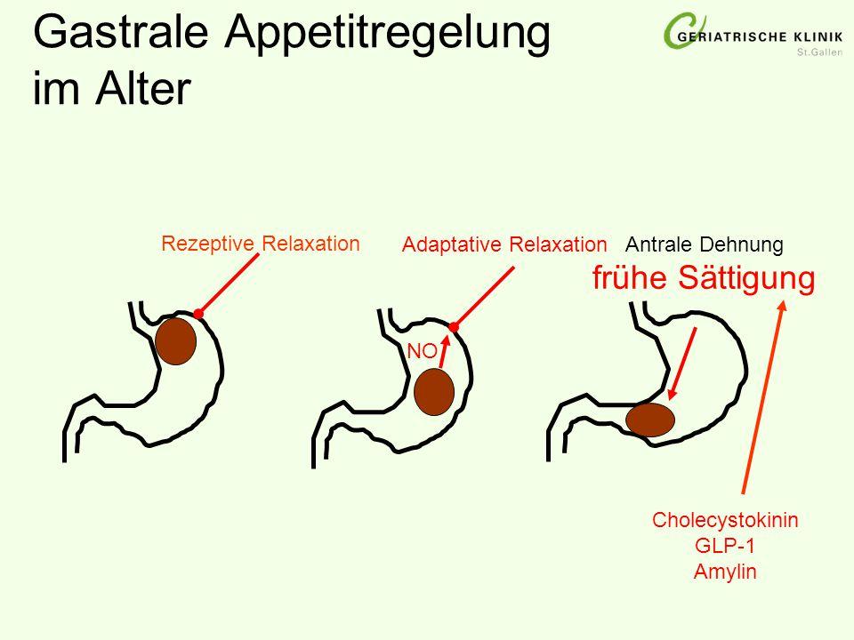 Gastrale Appetitregelung im Alter NO Adaptative RelaxationAntrale Dehnung frühe Sättigung Cholecystokinin GLP-1 Amylin Rezeptive Relaxation
