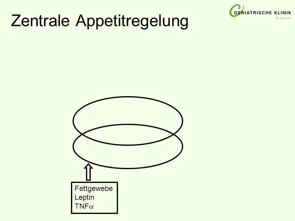 Fettgewebe Leptin TNF 