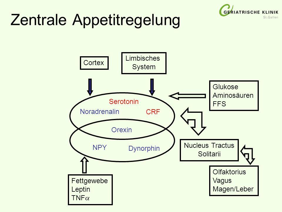 Zentrale Appetitregelung Cortex Limbisches System Glukose Aminosäuren FFS Nucleus Tractus Solitarii Noradrenalin CRF Olfaktorius Vagus Magen/Leber Fet