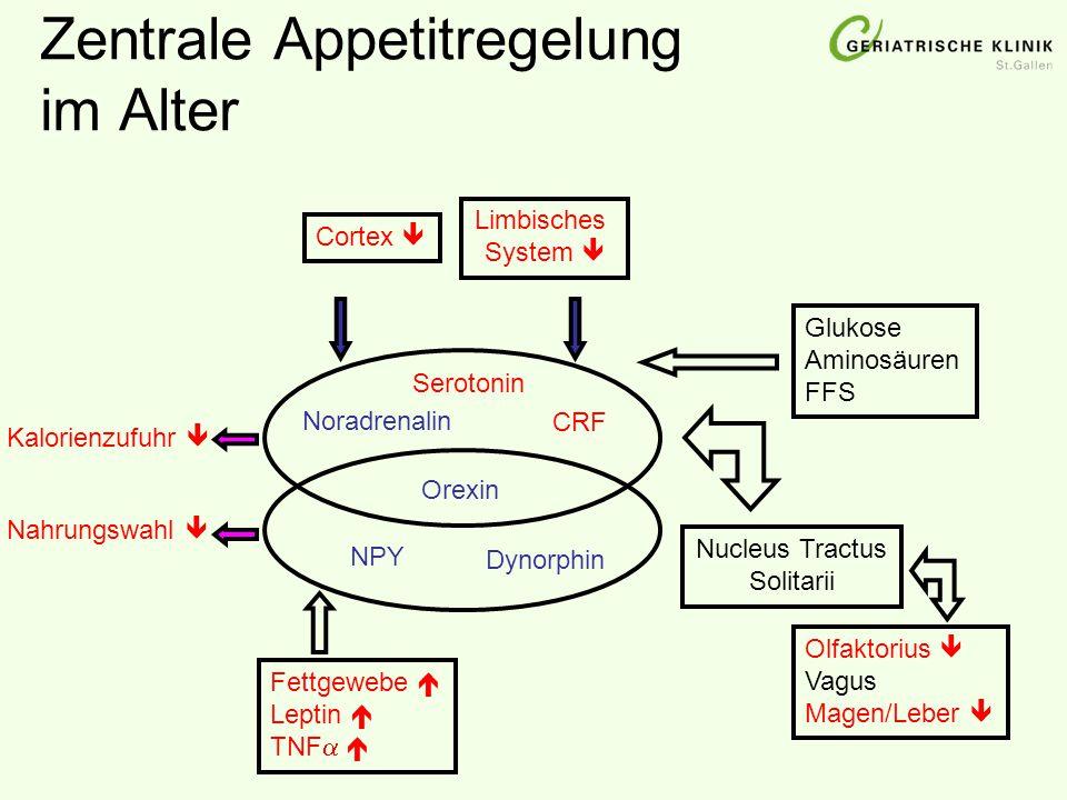 Zentrale Appetitregelung im Alter Cortex  Limbisches System  Glukose Aminosäuren FFS Nucleus Tractus Solitarii Noradrenalin CRF Olfaktorius  Vagus