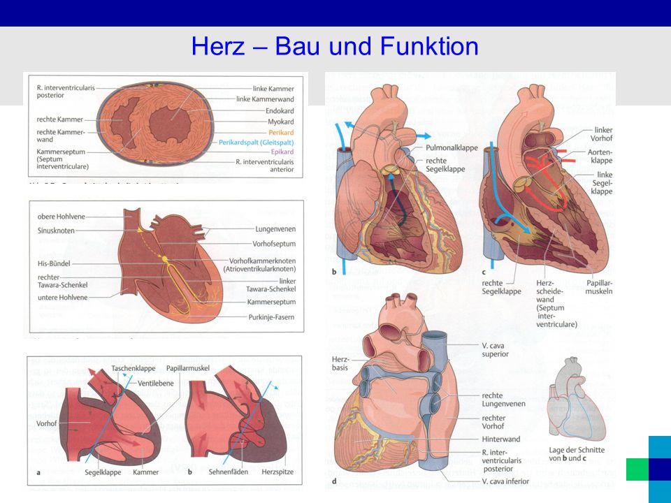 20 Übersicht Kardiale Leitsymptome 1.Zeichen der Herzinsuffizienz 2.