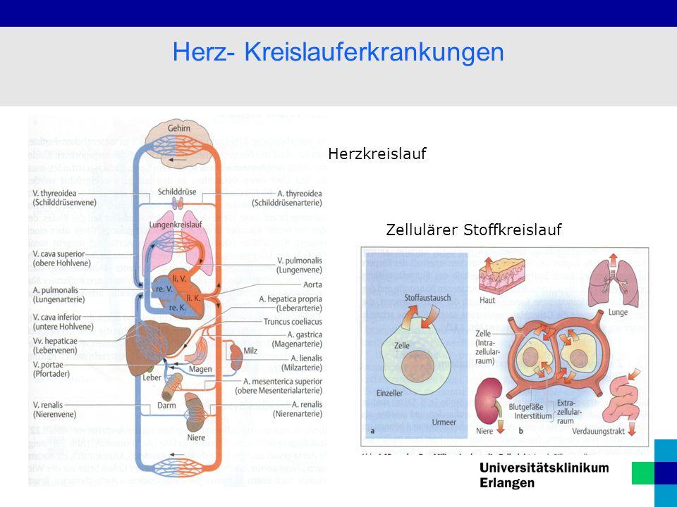 3 Herz- Kreislauferkrankungen