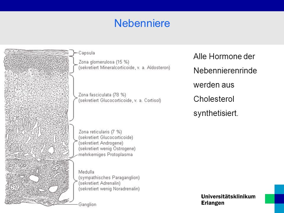 Alle Hormone der Nebennierenrinde werden aus Cholesterol synthetisiert. Nebenniere