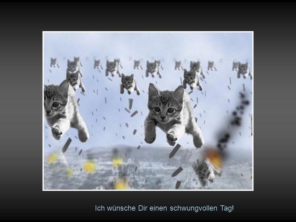 Katzen machen auch vor > Schleichwerbung < nicht halt… !!!!