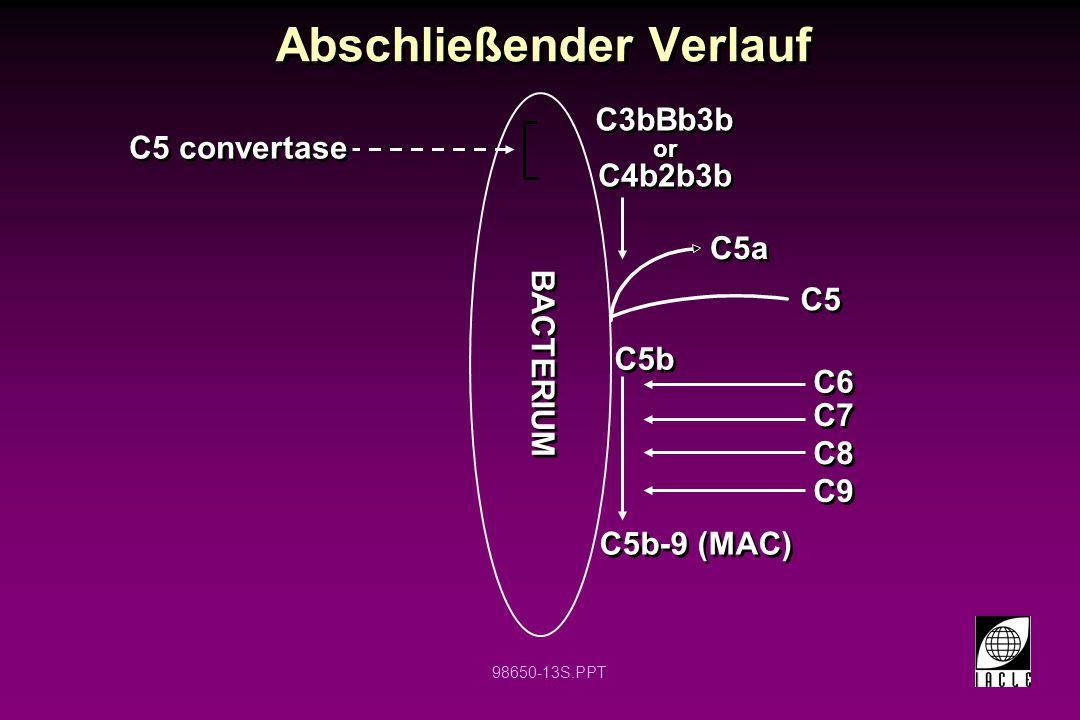 98650-13S.PPT Abschließender Verlauf C5 convertase C5b-9 (MAC) C3bBb3b C5b C5 C5a C4b2b3b C6 C7 C8 C9 or BACTERIUM