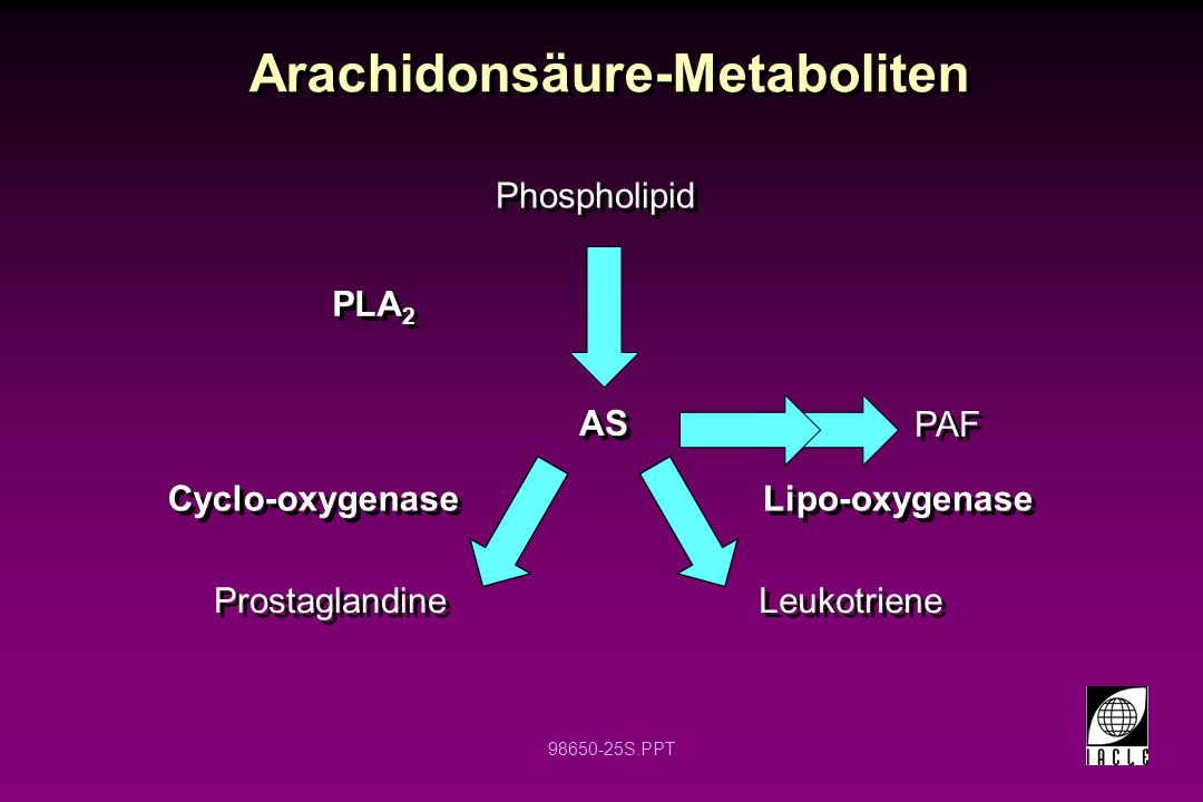 98650-25S.PPT Arachidonsäure-Metaboliten Phospholipid Prostaglandine Leukotriene AS PAF PLA 2 Cyclo-oxygenase Lipo-oxygenase