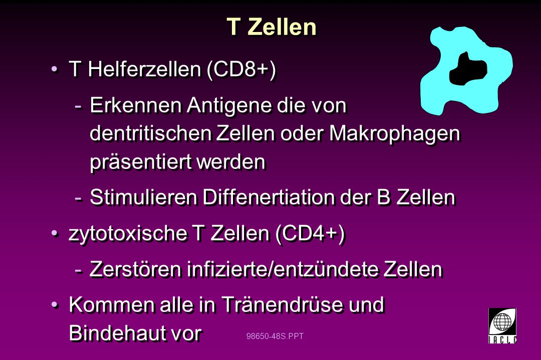 98650-48S.PPT T Zellen T Helferzellen (CD8+) -Erkennen Antigene die von dentritischen Zellen oder Makrophagen präsentiert werden -Stimulieren Diffener