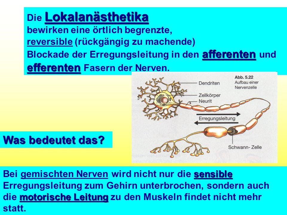 All Copyrights by P.-A. Oster ® Lokalanästhetika Die Lokalanästhetika bewirken eine örtlich begrenzte, reversible (rückgängig zu machende) afferenten