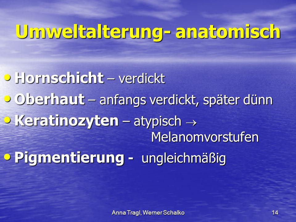 Anna Tragl, Werner Schalko14 Umweltalterung- anatomisch Hornschicht – verdickt Hornschicht – verdickt Oberhaut – anfangs verdickt, später dünn Oberhau