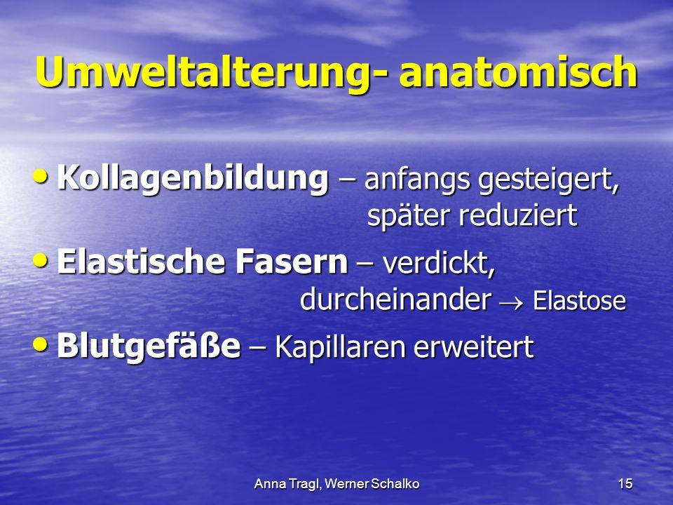 Anna Tragl, Werner Schalko15 Umweltalterung- anatomisch Kollagenbildung – anfangs gesteigert, später reduziert Kollagenbildung – anfangs gesteigert, s
