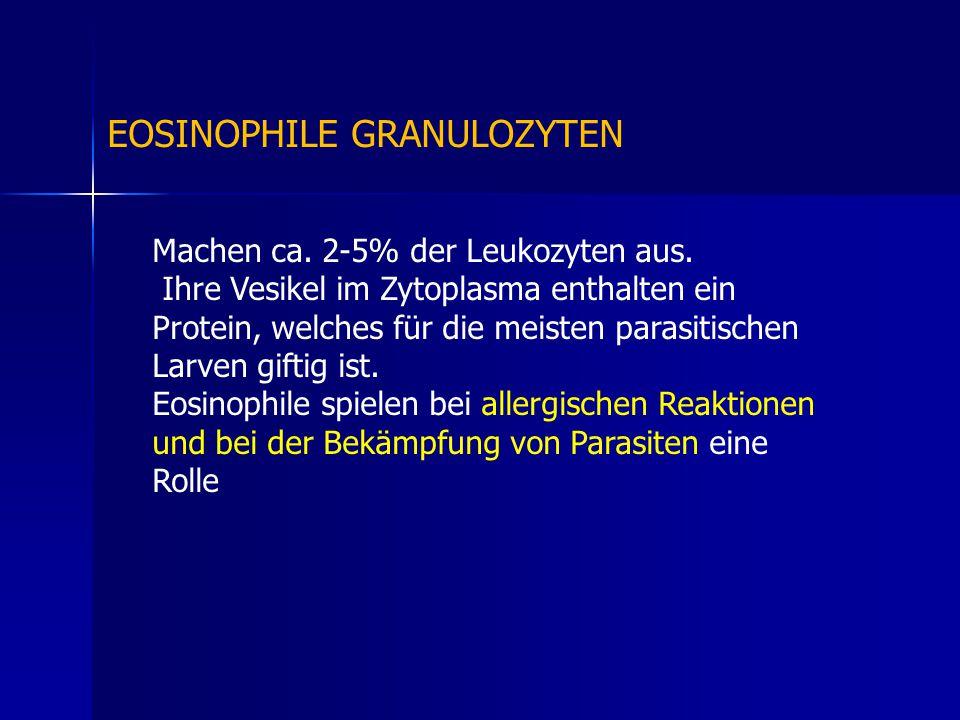 Machen ca. 2-5% der Leukozyten aus. Ihre Vesikel im Zytoplasma enthalten ein Protein, welches für die meisten parasitischen Larven giftig ist. Eosinop