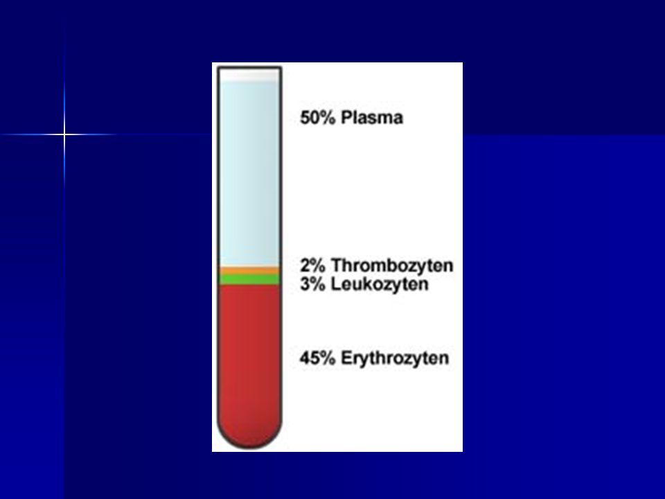 - sind die häufigsten Leukozyten (55-70%).Sie sind durch einen gelappten Zellkern gekennzeichnet.