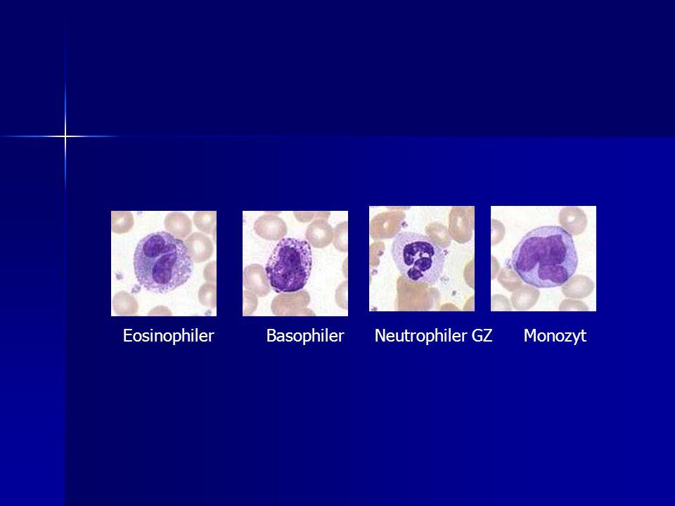 Eosinophiler Basophiler Neutrophiler GZ Monozyt