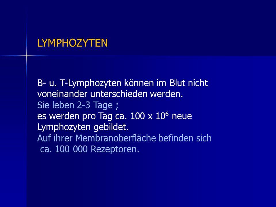 B- u.T-Lymphozyten können im Blut nicht voneinander unterschieden werden.