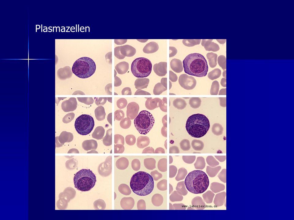 Plasmazellen