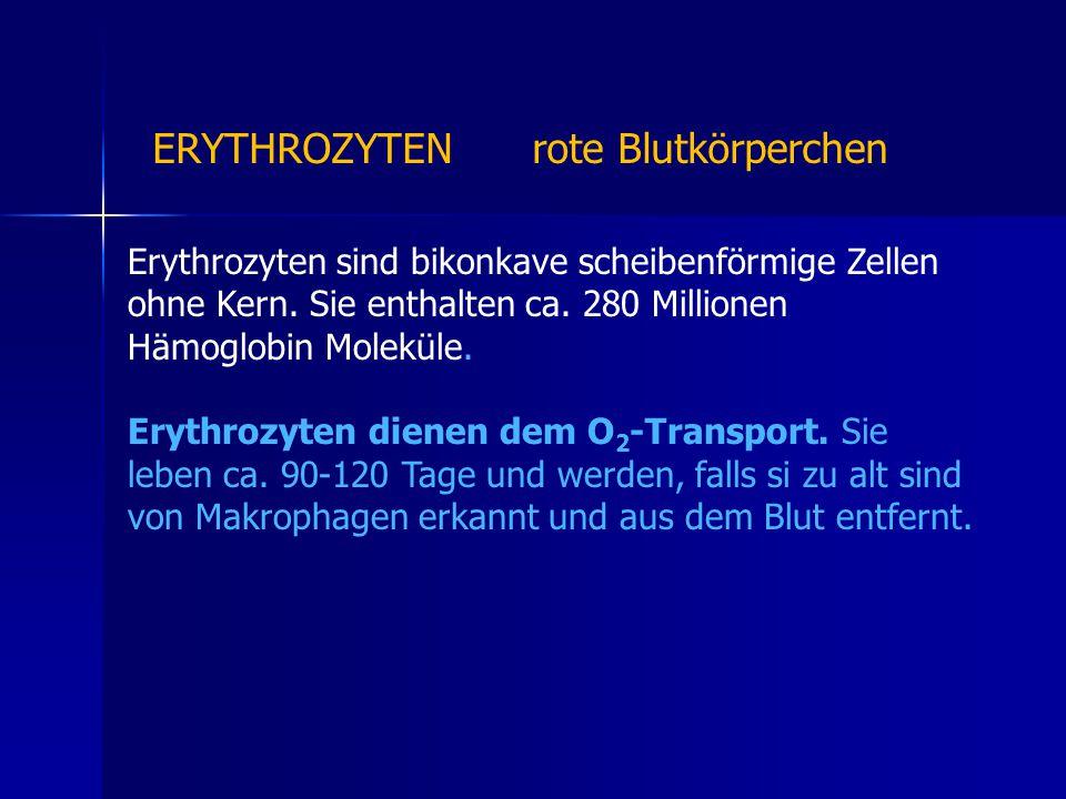 Erythrozyten sind bikonkave scheibenförmige Zellen ohne Kern.